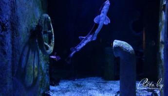 3 дни по италиански - аквариум_001