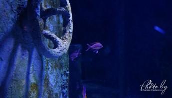 3 дни по италиански - аквариум_002