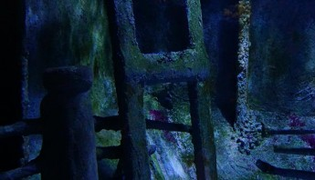 3 дни по италиански - аквариум_004