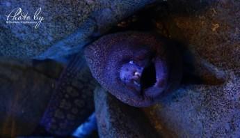 3 дни по италиански - аквариум_005