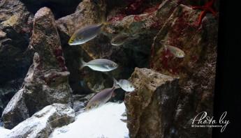 3 дни по италиански - аквариум_008