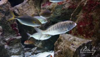 3 дни по италиански - аквариум_009