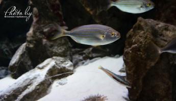 3 дни по италиански - аквариум_011