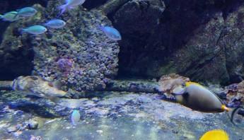 3 дни по италиански - аквариум_014
