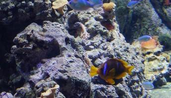 3 дни по италиански - аквариум_015