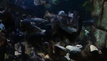 3 дни по италиански - аквариум_017